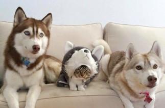 12 diena: jie vis dar galvoja, kad aš esu šuo