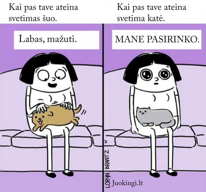 Kai pas tave ateina svetima katė