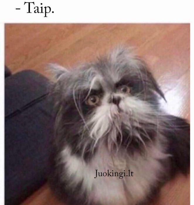 Čia katė ar šuo