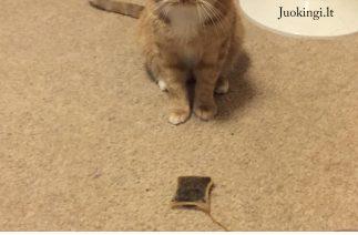 Mūsų katė atneša arbatos maišelius